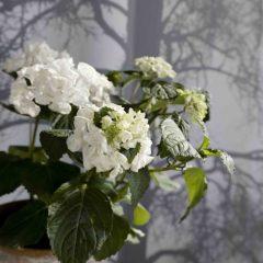 kukka parvekkeelle